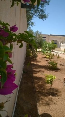 House in Djerba midoun - Vacation, holiday rental ad # 11372 Picture #1