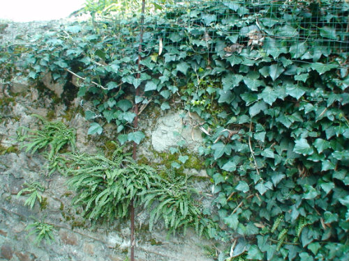 Farm in Blot l'eglise - Vacation, holiday rental ad # 3006 Picture #17