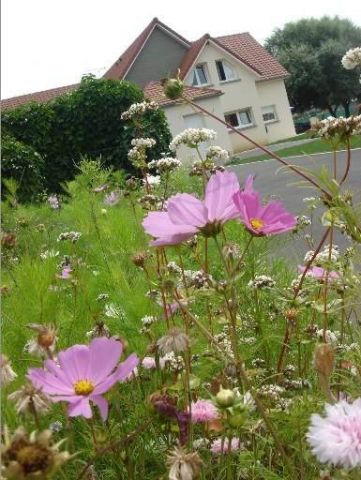 Bed and Breakfast in Berck sur mer - Vacation, holiday rental ad # 3538 Picture #4