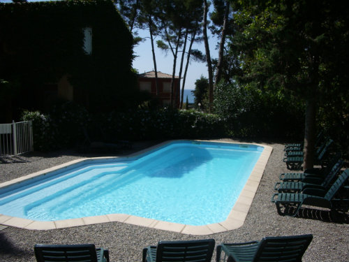 Flat in Bandol - Vacation, holiday rental ad # 3690 Picture #7