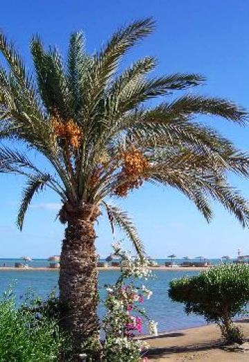 House in El Gouna - Hurghada - Vacation, holiday rental ad # 4979 Picture #1