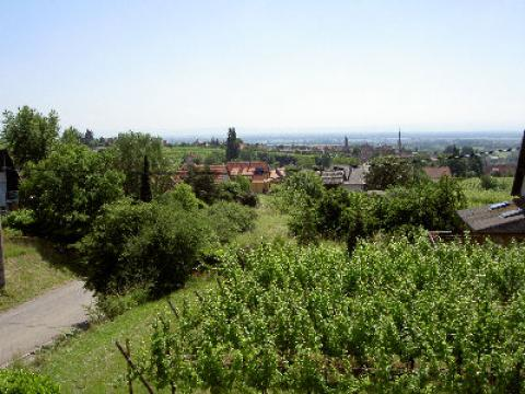 Bed and Breakfast in Mittelbergheim - Vacation, holiday rental ad # 6191 Picture #3
