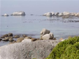 House in Simons town for   8 •   with private pool   #10224