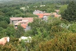 Gite Alzon - 4 personnes - location vacances  n°11841