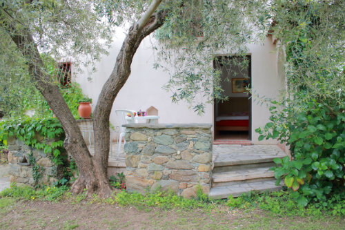 Bed and Breakfast in Querciolo corse corsica - Vakantie verhuur advertentie no 22568 Foto no 14