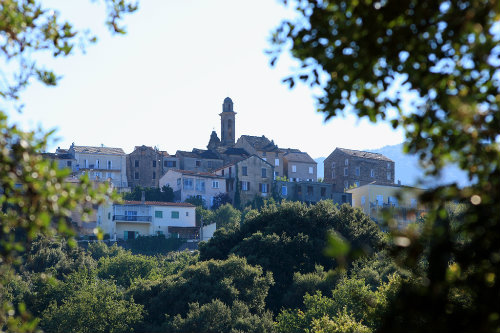 Bed and Breakfast in Querciolo corse corsica - Vacation, holiday rental ad # 22840 Picture #12