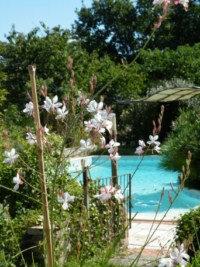 Chambre d'hôtes Saint Cirice - 4 personnes - location vacances  n°23669