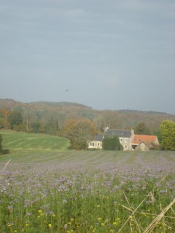 Gite Plouigneau - 5 personnes - location vacances  n°24259