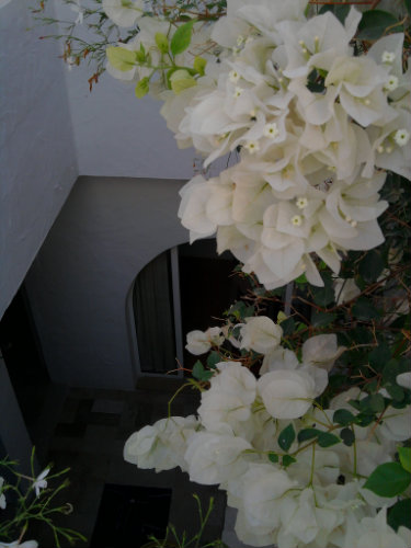 Huis Hammamet  - 5 personen - Vakantiewoning  no 24884
