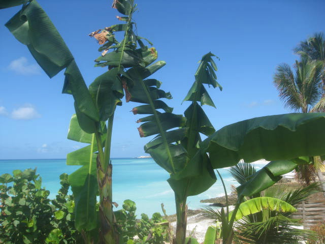 House in SINT MAARTEN - Vacation, holiday rental ad # 25552 Picture #5