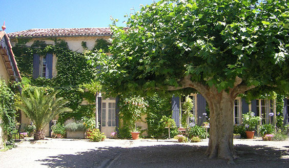 House Fanjeaux - 20 people - holiday home  #27802