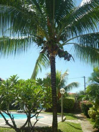 House in Grand Baie - Vacation, holiday rental ad # 30733 Picture #18