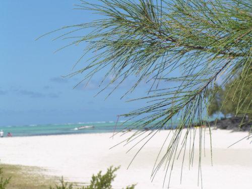 Maison 4 personnes Trou D'eau Douce - location vacances  n°33363