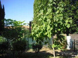 Bed and Breakfast Le Boulou - 1 people - holiday home  #33772