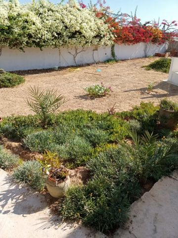 House in Djerba - Vacation, holiday rental ad # 34993 Picture #10