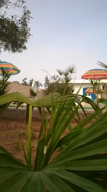 Maison Midoun Djerba  - 7 personnes - location vacances  n°35597