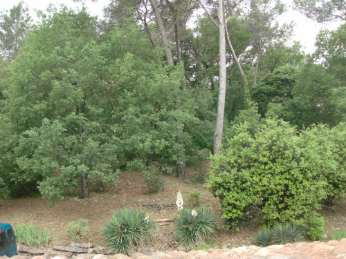 Studio in Valbonne - Vacation, holiday rental ad # 36945 Picture #8