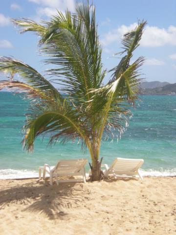 Location Saint Martin Vacances à partir de 280€/semaine  n°38114