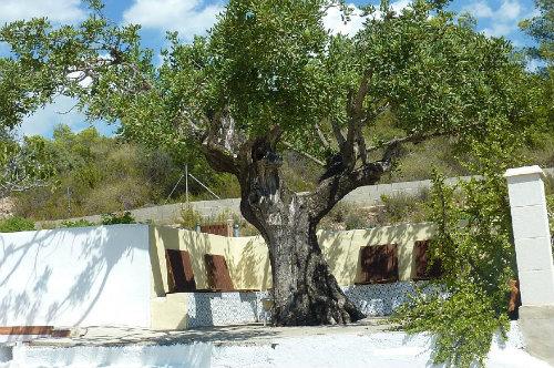 Chalet Olocau - 4 personnes - location vacances  n°39434