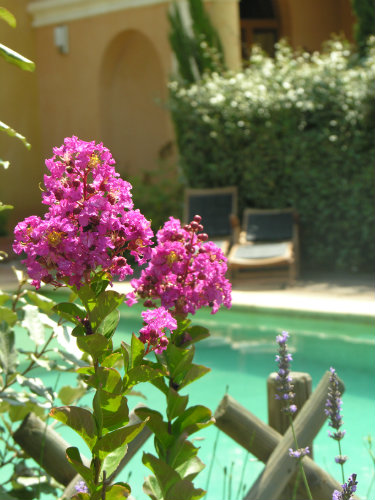 in Rousillon en Provence - Vacation, holiday rental ad # 41073 Picture #2