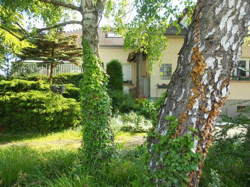 Maison Hilsenheim - 12 personnes - location vacances  n°43495