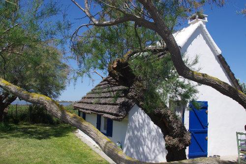 House Les Saintes Maries De La Mer - 6 people - holiday home  #43717