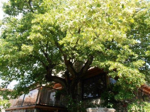 Gite St Symphorien De Mahun - 14 personnes - location vacances  n°45905