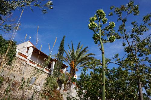 House 4 people Villajoyosa - holiday home  #52518