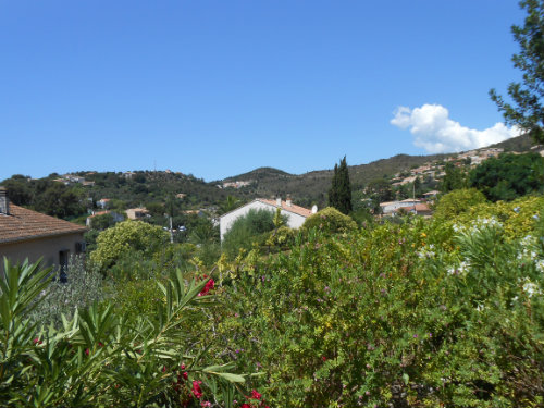 House in Hyeres - Vacation, holiday rental ad # 54228 Picture #0