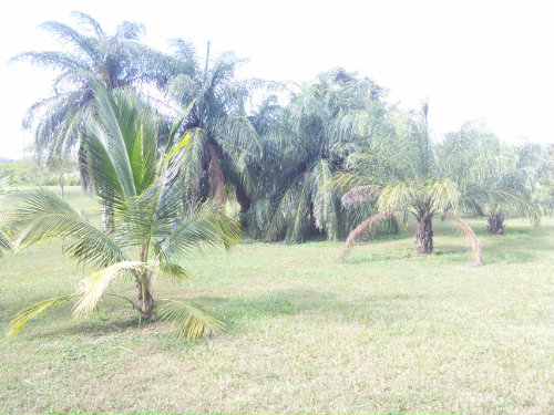 in San Ignacio - Vacation, holiday rental ad # 54328 Picture #2