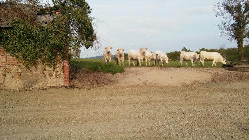 Farm Bourbon Lancy - 6 people - holiday home  #56799