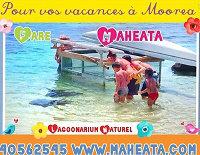 Gite Moorea - 3 personnes - location vacances  n°56988