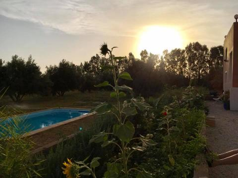 Bed and Breakfast Ourika-marrakech - 8 people - holiday home  #60804