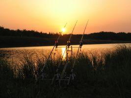 Bois de champ -    vue sur lac