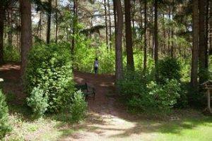 Ferme Dieverbrug - 6 personnes - location vacances  n°62934