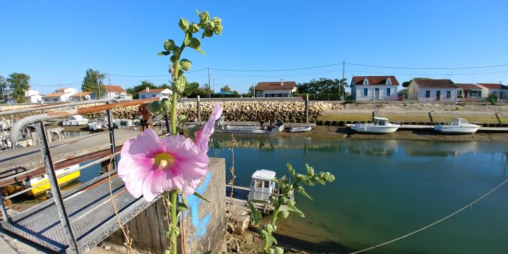 Chalet in St pierre d'oleron - Vacation, holiday rental ad # 66498 Picture #14