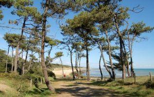 Maison Jard Sur Mer - 15 personnes - location vacances  n°66507