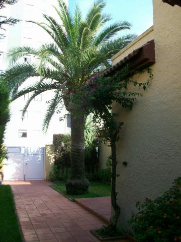 Chalet in Plage de gandia - Vacation, holiday rental ad # 67014 Picture #1