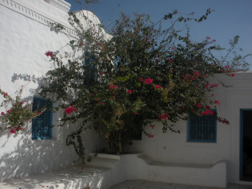 House in Djerba Houmt Souk - Vacation, holiday rental ad # 20724 Picture #1